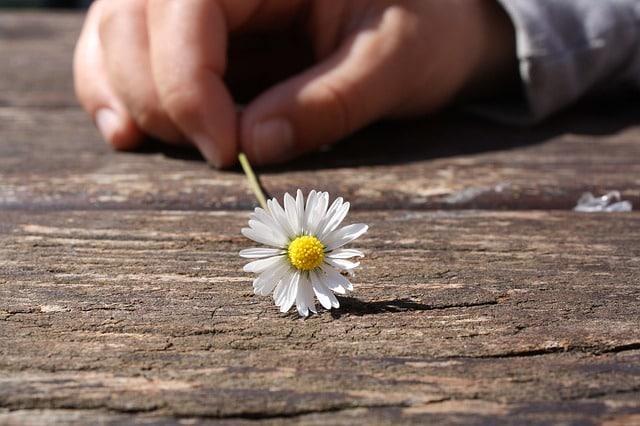 Glücklicher werden als Alltags-Kunst